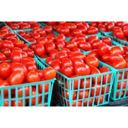 Small Basket of Tomatoes