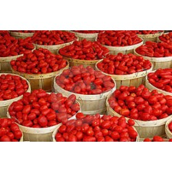 Big Basket of Tomatoes