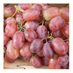 Grape (seedless)